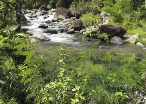Sungai Desa Sidomulyo Lebakbarang