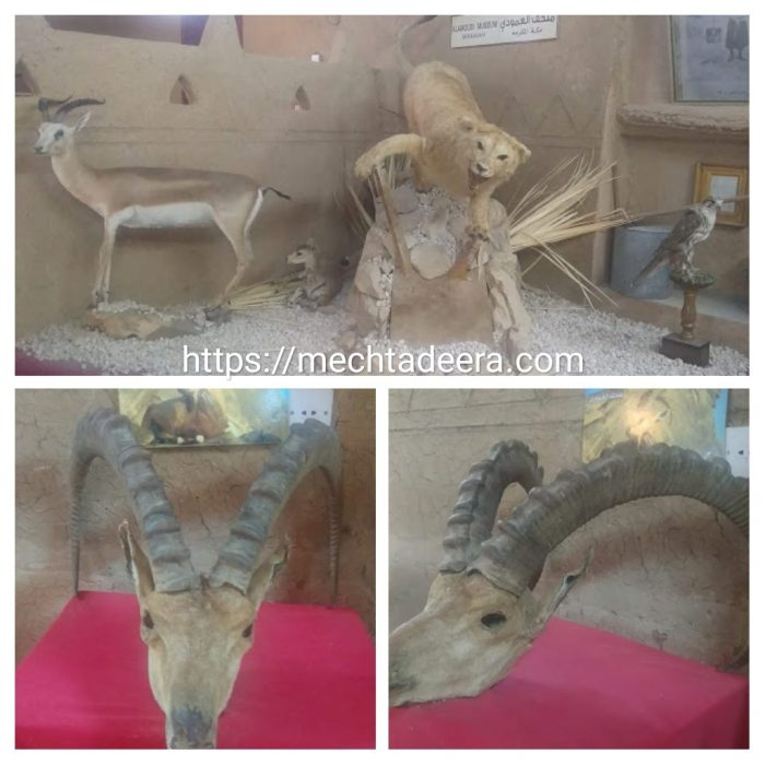 Binatang gurun di Al Amoudi Museum