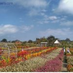 Taman Bunga Romantic Garden