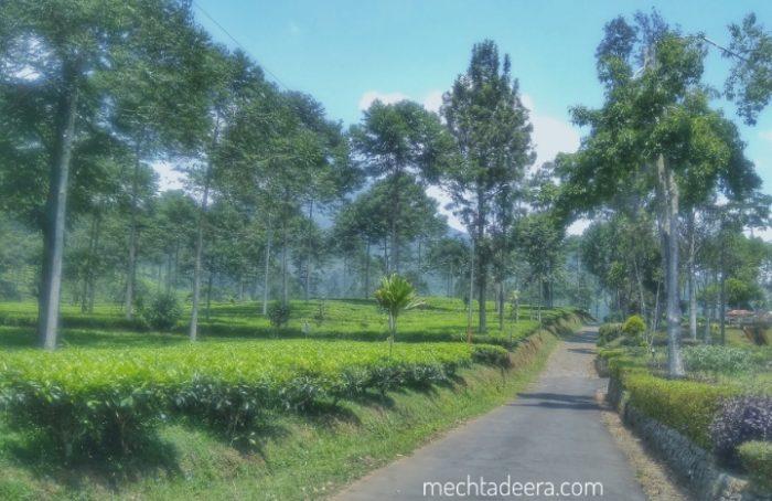 View Agrowisata Pagilaran