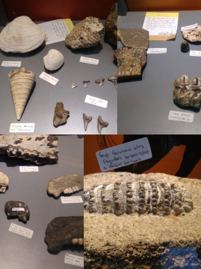 Fosil Semedo