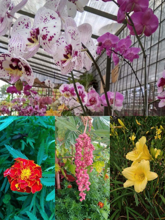 Bebungaan di Wisata Taman Anggrek