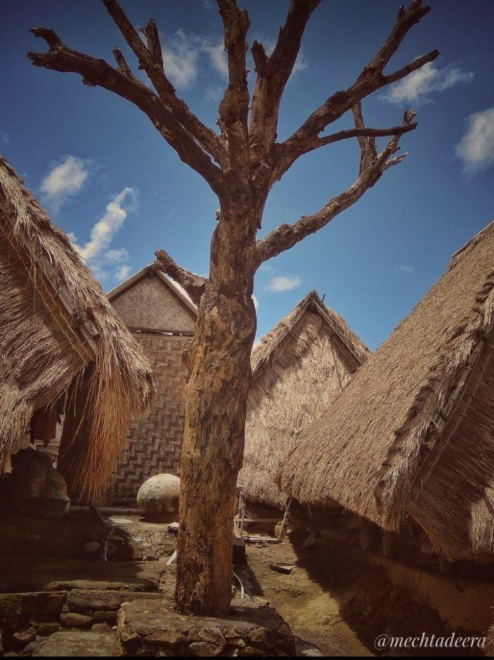 Pohon Cinta Desa Sade