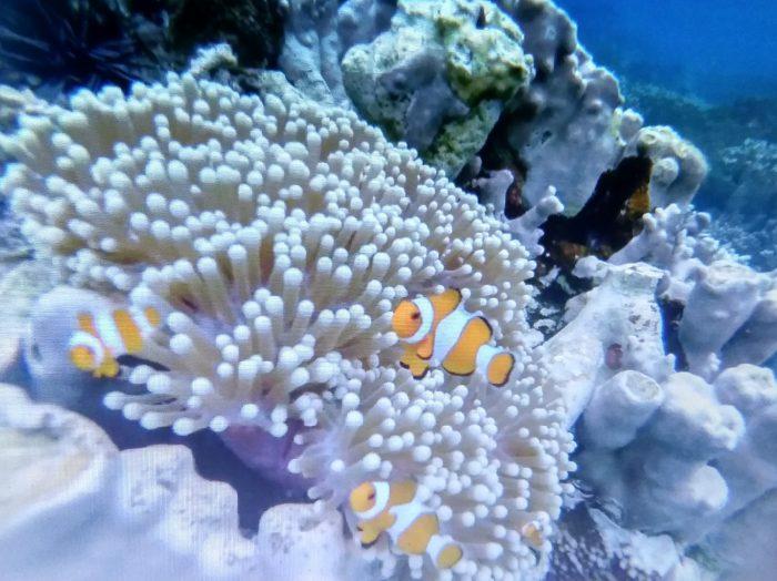 Alam bawah laut Karimunjawa