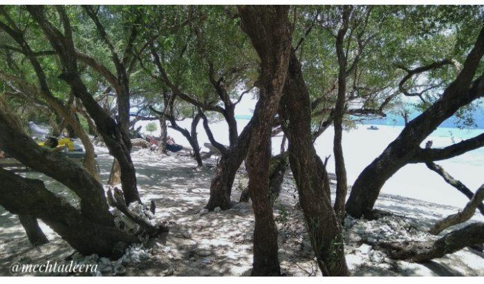 Spot pepohonan di pantai Gili Trawangan