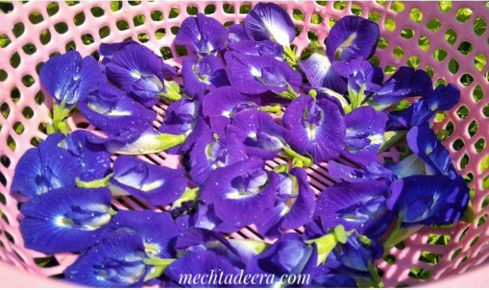 Bunga Telang siap dikeringkan