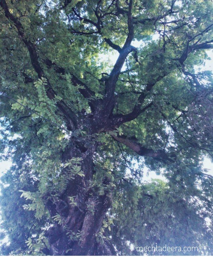 Hutan sebagai paru-paru dunia