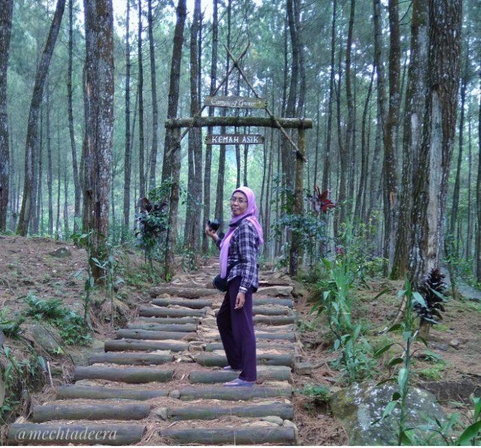Hutan Pinus Petungkriyono
