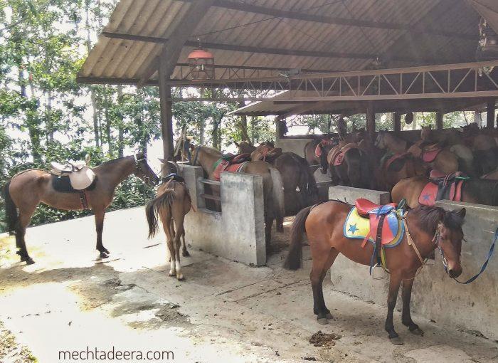 Sewa Kuda Gedongsongo