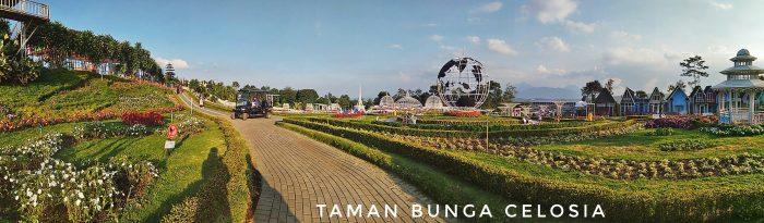 Panorama Celosia Happy n Fun