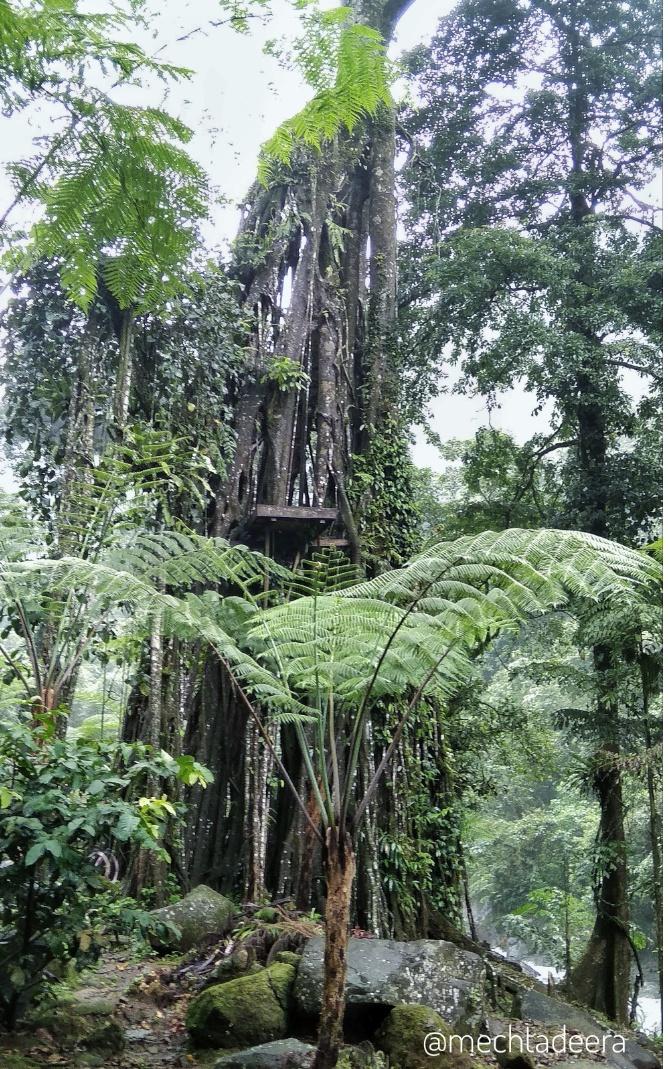 Pohon Selfi di Welo Asri