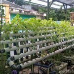 Sayur hidroponik di pekarangan